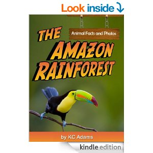 rainforest book